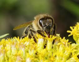 Méhpempő rendelés egyszerűen