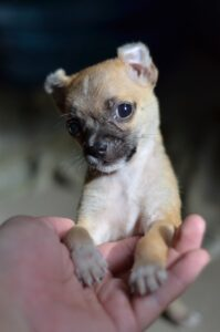 Kisméretű kutya